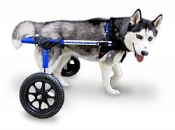 Best Dog Wheelchairs Reviews (2019) | (Revealed) by Mobility Pedia