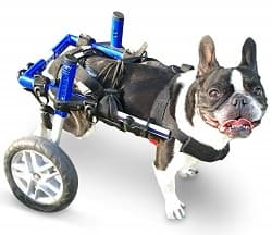 7 Best Dog Wheelchairs (Reviewed in 2019) | Mobility Pedia